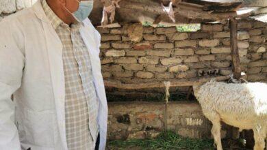 Photo of الزراعة : تم تحصين أكثر من 2 مليون رأس ماشية ضد الحمي القلاعية