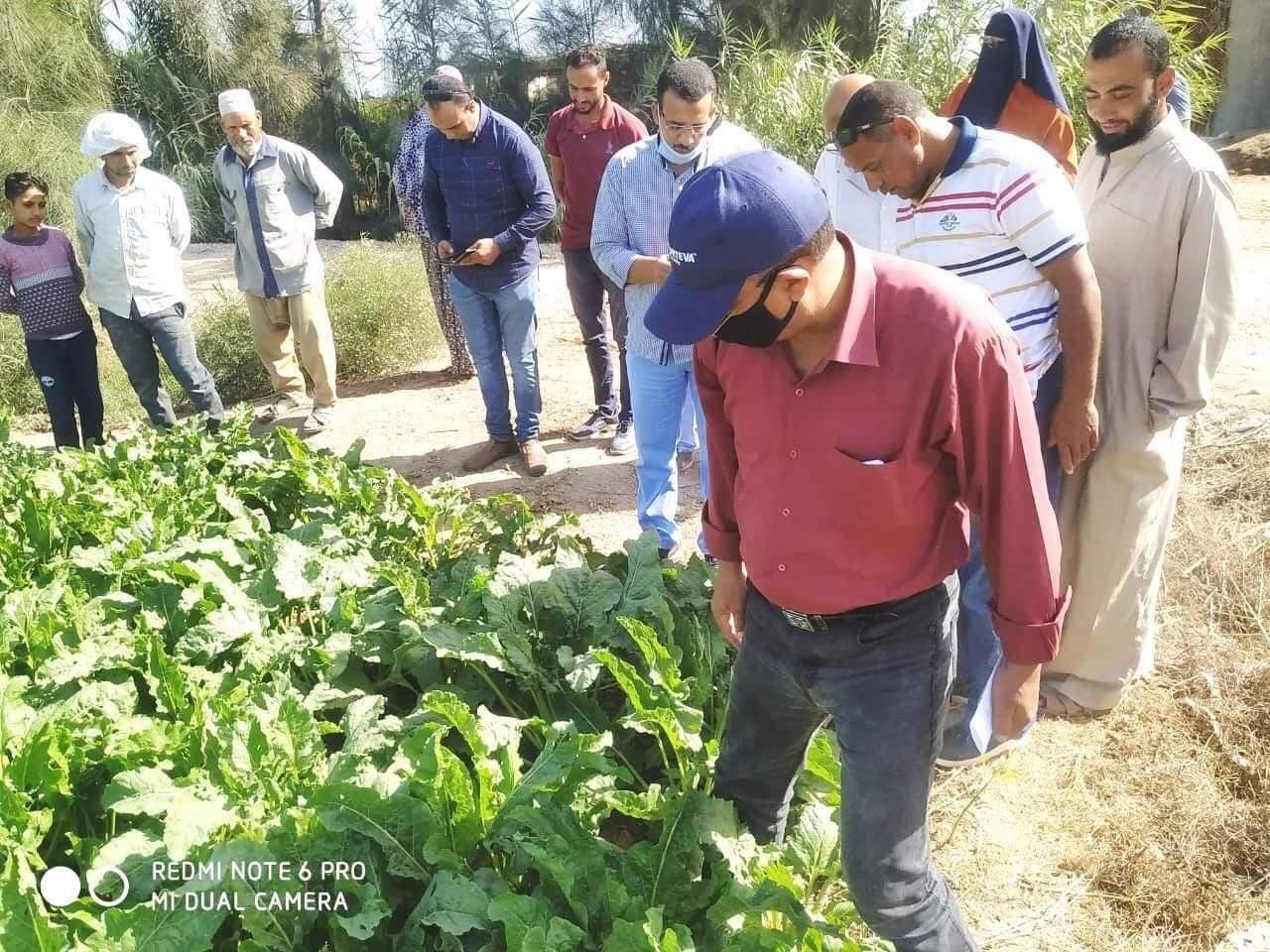مدرسة حقلية لمزارعى بنجر السكر بزراعة البحيرة