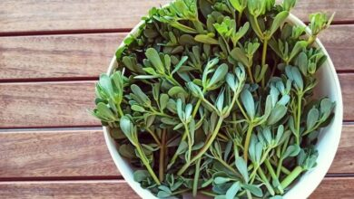 Photo of نبات الرجلة وفوائده المذهلة في الحفاظ على صحة الدماغ
